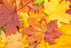 Colorful autumn leaves. As background royalty free stock photos