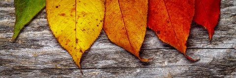 Colorful Autumn Leaves royalty free stock photo