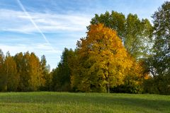 Colorful autumn leaves on a copse of trees. Colorful autumn leaves on a copse of assorted trees in rural woodland under a sunny blue sky with clouds marking the stock image