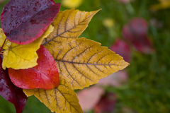 Colorful Autumn Leaves with copy space Stock Photo