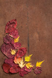 Colorful autumn leaves on dark rustic background Royalty Free Stock Photography