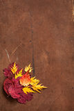 Colorful autumn leaves on dark rustic background.  Stock Photography