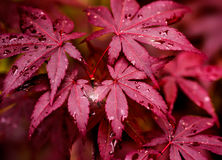Colorful autumn leaves with drops Royalty Free Stock Photography