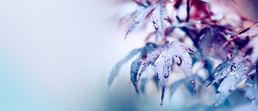 Colorful autumn leaves with drops Stock Photo