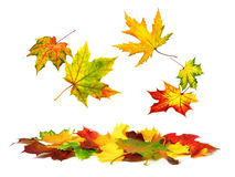 Colorful autumn leaves falling down stock images