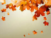 Colorful autumn leaves falling. EPS 10 Stock Images