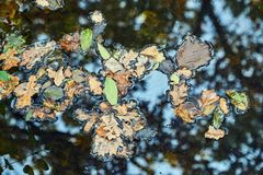 Leaves floating on the water surface Stock Image