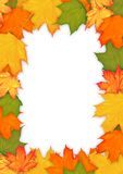 Colorful autumn leaves frame Stock Photos