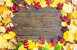 Colorful autumn leaves frame Stock Image