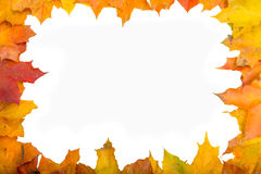 Colorful autumn leaves. Frame with colorful leaves with white background Stock Images
