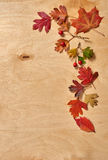 Colorful autumn leaves frame on wooden background Stock Image
