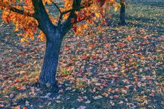 colorful autumn leaves, autumn colored carpet royalty free stock photo