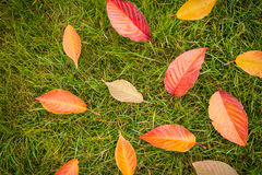 Colorful autumn leaves on green grass (lawn) - top view Stock Photo
