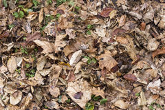 Colorful autumn leaves. green grass protruding from behind the. Leaves Stock Photography