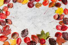 Colorful autumn leaves on a grey stone background. Top view. Copy space Royalty Free Stock Photography