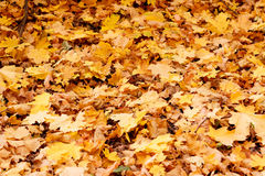 Colorful autumn leaves on the ground Stock Photography