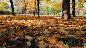Colorful autumn leaves on the ground stock images