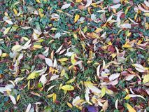 Colorful autumn leaves on ground, Lithuania Royalty Free Stock Photo