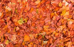 Colorful autumn leaves on the ground, natural background stock image