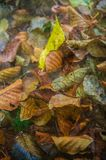 Autumn leaves with textured wallpaper