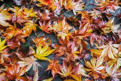 Colorful Autumn leaves on ground Stock Photos