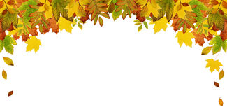 Colorful autumn leaves header. Colorful autumn leaves top header isolated on white background. Flat lay. Top view Stock Images