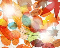 Colorful autumn leaves illustration Royalty Free Stock Photos