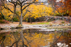Colorful Autumn. Leaves and its reflection in the pond at Central Park, New York City royalty free stock images