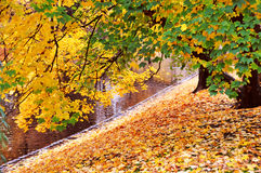 Colorful autumn leaves Stock Image