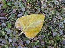 Colorful autumn leaves, Lithuania Stock Image