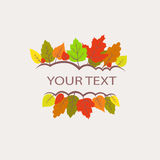 Colorful autumn leaves logo Royalty Free Stock Images