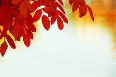 Colorful Autumn Leaves. Nice to use as autumn background Stock Photography