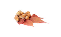 Colorful, autumn leaves and nuts on a white. Stock Photos