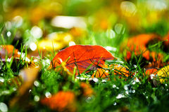 Colorful autumn leaves in october park Stock Photography