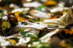Colorful autumn leaves in october park Royalty Free Stock Photo