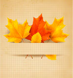 Colorful autumn leaves on a old paper Stock Images