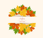 Colorful autumn leaves on a old paper Stock Photos