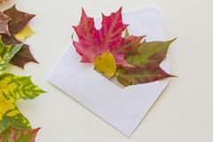 Colorful autumn leaves and open envelop on white background. Close up. Royalty Free Stock Image