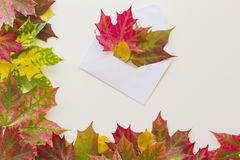 Colorful autumn leaves and open envelop on white background. Stock Image
