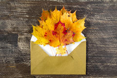 Colorful autumn leaves and open envelop Royalty Free Stock Images