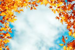 Colorful autumn leaves over blue sky Stock Image