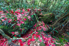 colorful autumn leaves Stock Photography
