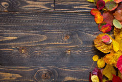 Colorful autumn leaves, over a wooden background Stock Photos