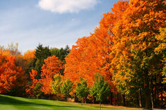 Colorful autumn leaves in park Stock Image