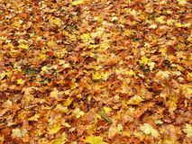 Colorful autumn leaves pattern , Lithuania Stock Photo
