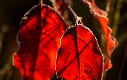 Colorful autumn leaves and plants covered with frost Stock Photos
