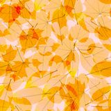 Colorful autumn leaves. plus EPS10 Stock Photo