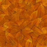 Colorful autumn leaves. plus EPS10 Stock Images