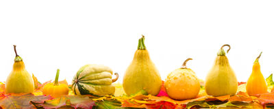 Colorful autumn leaves with Pumpkin Stock Image