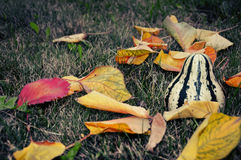 Colorful autumn. Leaves and pumpkin in the grass Stock Photo